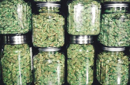 Cannabis in Pontiac MI